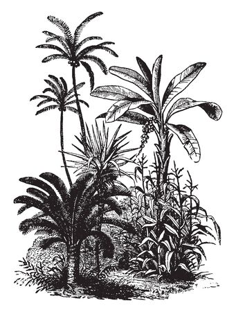 Vegetation is an assemblage of plant species and the ground cover they provide, vintage line drawing or engraving illustration.