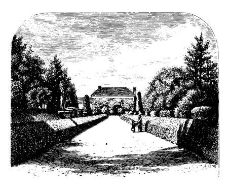 Garden walkway Mississippi vintage line drawing. 向量圖像