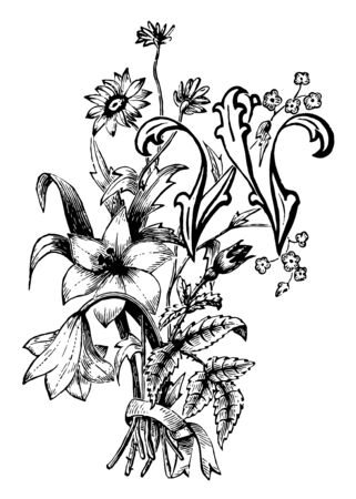 Capital Letter W with a floral pattern surrounding it, vintage line drawing or engraving illustration.