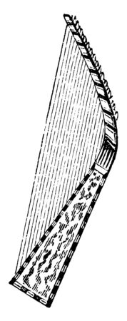 Harp is a stringed musical instrument that has a number of individual strings running at an angle to its soundboard, vintage line drawing or engraving illustration.