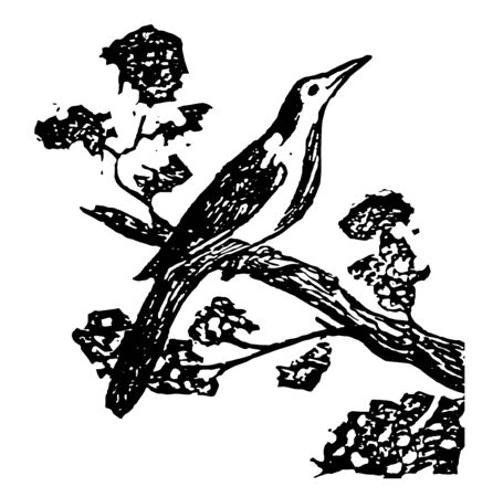 Mocking bird is a songbird of Mimidae family known for mimicking the songs of other birds and sounds vintage line drawing.