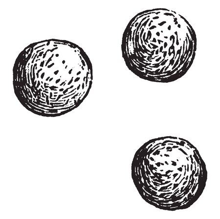 An image of spores. A spore is a reproductive cell or group of cells, its produced by some plants, that is capable of developing into an adult plant without combining with another reproductive cell, vintage line drawing or engraving illustration. Çizim