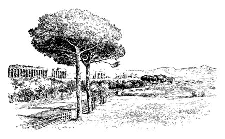 This image shows the view of nature. There is a Lazio plain. There is a larger tree and, through it, there are also smaller trees, vintage line drawing or engraving illustration.