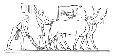 An illustration of Egyptian men plowing with the help of oxen, vintage line drawing or engraving illustration.