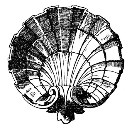 Scallop Design Shell was designed by sculptor Lehr of Berlin, vintage line drawing or engraving illustration.
