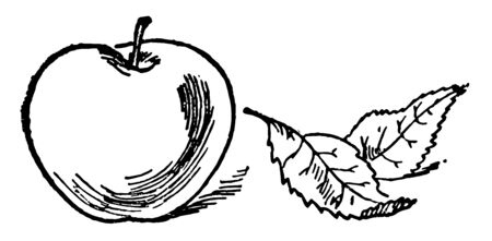 This card has apple on it. This card represents One Apple and is used for many  types of classroom counting activities,  vintage line drawing or engraving illustration. Ilustrace