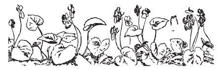 Dans cette image montrant beaucoup de plantes violettes, beaucoup de grandes feuilles et fleurs, dessin de ligne vintage ou illustration de gravure.