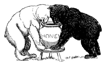 Bears 4, this picture shows both white bear and black bear looking into honey jar and trying to eat at once, vintage line drawing or engraving illustration Ilustração