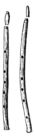Double Pipes which is an ancient Greek Double Pipes, vintage line drawing or engraving illustration.