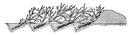 Abatis consisting of trees lying parallel to each other with the branches pointing in the general direction of approach and interlaced, vintage line drawing or engraving illustration.