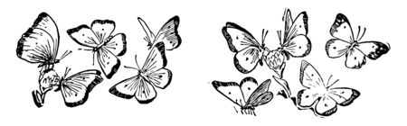 This card shows butterflies. Five butterflies are flying in a group of 2. Two butterflies in each group are on the flower picking up the honey while other three are flying around a flower, vintage line drawing or engraving illustration. Vectores