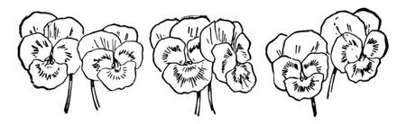 La carta mostra 2 viole del pensiero raggruppate in 3. Questi sono piccoli fiori con tre colori. Giallo, bianco e viola, disegno della linea vintage o illustrazione dell'incisione. Vettoriali