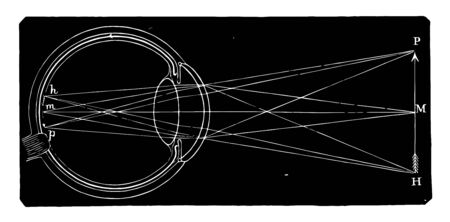 This illustration represents A Diagram of the Retina and Crystalline Lens, vintage line drawing or engraving illustration.