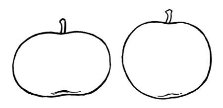 In this image are the oblate left side and spherical right side forms of apple, vintage line drawing or engraving illustration.