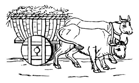 Two bulls pulling a Plaustrum, vintage line drawing or engraving illustration.