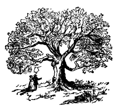 It is a large white oak tree found in connecticut in United states fell due to strom and rain vintage line drawing.