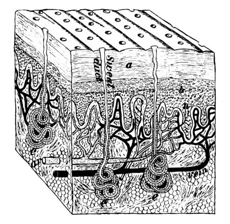 This illustration represents Magnified Image of the Skin, vintage line drawing or engraving illustration.