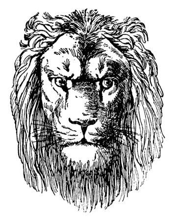 Lion Head is a prospectus of Dr. Schuberts Naturgeschichte, vintage line drawing or engraving illustration. Ilustração