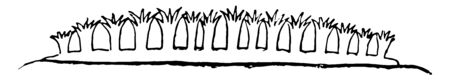 Stolonifera Alcyonaria which is a coral sub order in the order Alcyonacea, vintage line drawing or engraving illustration. Standard-Bild - 132981957