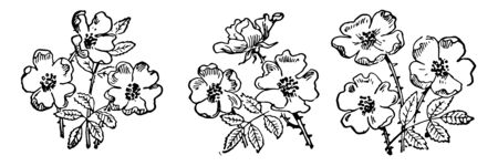 This cards has flowers. 9 Flowers are grouped into 3. There are 3 groups of flowers, Vintage line drawing or engraving illustration.