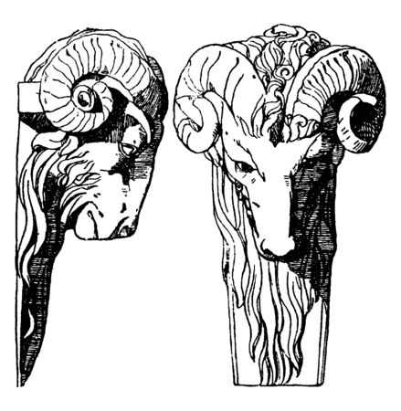 Ram Head is a dates back to the Late Renaissance, vintage line drawing or engraving illustration.