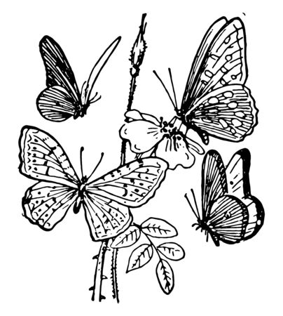 This card shows butterflies. One butterfly is on the flower picking up the honey while other three butterflies are flying around a flower in search of honey, vintage line drawing or engraving illustration.  イラスト・ベクター素材