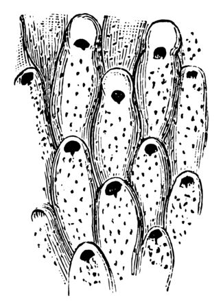 Prehistoric Bryozoan is marine animal similar to a coral, vintage line drawing or engraving illustration.