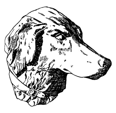 Hunting Dog Head was designed by Habenschaden of Munchen, vintage line drawing or engraving illustration.