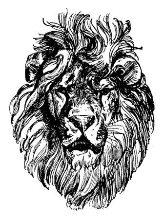 Lion Head is a painting by Paul Meyerheim, vintage line drawing or engraving illustration.  イラスト・ベクター素材