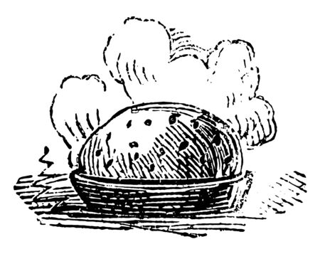 A picture of Acorn which is a fruit of the Oak, vintage line drawing or engraving illustration. Illustration