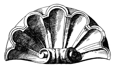 Scallop Design Shell was used as a decoration of a niche, vintage line drawing or engraving illustration.