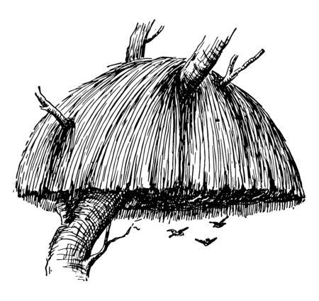 This illustration represents Weaver Bird Nest, vintage line drawing or engraving illustration.