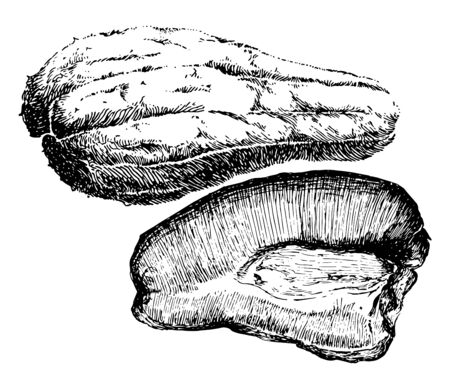 A gourd shaped fruit cut into two sections, vintage line drawing or engraving illustration.
