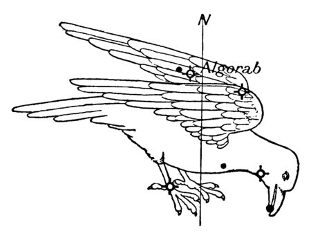 The Corvus is a group of stars of crow or raven, vintage line drawing or engraving illustration. Illustration