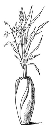Rosebud vase are those begining to unfold are the best, It peel off the outside petals and grasping each bud in turn near its base with the thumb, vintage line drawing or engraving illustration.