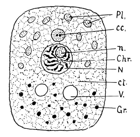 A cell consists of three parts, vintage line drawing or engraving illustration. Illustration