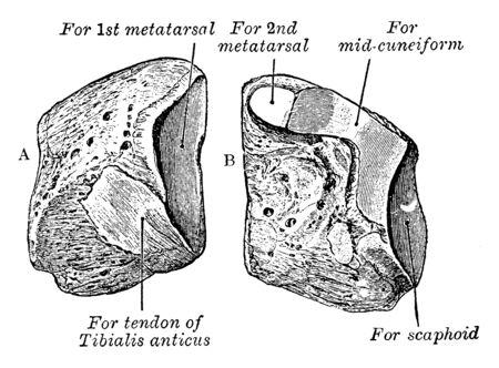 This illustration represents Cuneiform, vintage line drawing or engraving illustration.