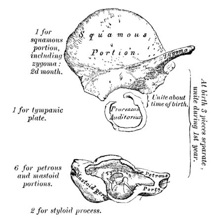 This illustration represents Development of Temporal Bone, vintage line drawing or engraving illustration. Illustration