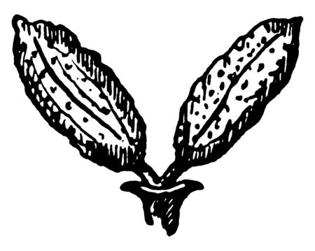 A picture of flower having stamens only, vintage line drawing or engraving illustration.