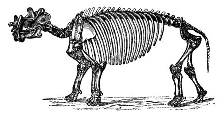 Dinoceras Mirabile which is both large and strongly built, vintage line drawing or engraving illustration.