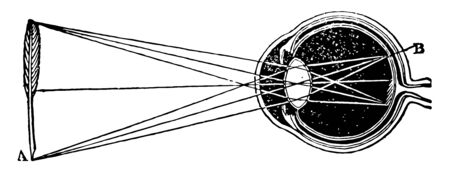This illustration represents Convergence of Rays in the Aqueous Humor of the Eyeball, vintage line drawing or engraving illustration.
