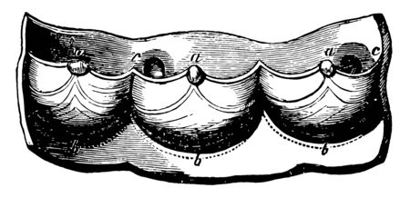 This diagram represents a Semilunar valves of the heart, vintage line drawing or engraving illustration. Ilustracja