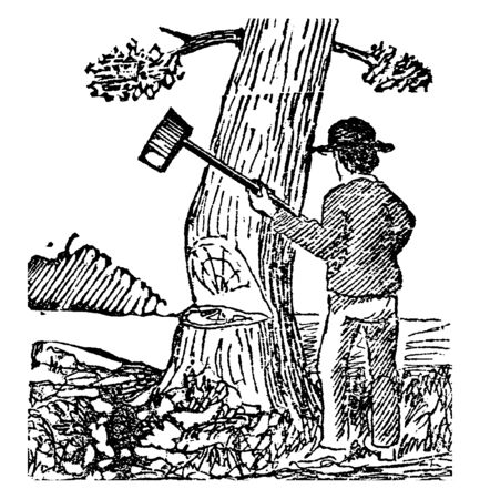Picture of a wood cutter cutting a tree with axe. He has already given many blows of tree already, vintage line drawing or engraving illustration. Ilustração