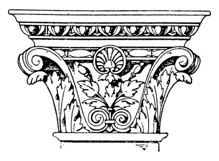 Corinthian Pilaster Capital, an Italian Renaissance design,  pilaster is broader in proportion to its height,  spiral scroll like ornaments, vintage line drawing or engraving illustration.