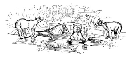 Bear family, this scene shows a family of bears jumps in water and some bears standing outside water, vintage line drawing or engraving illustration Stock Illustratie