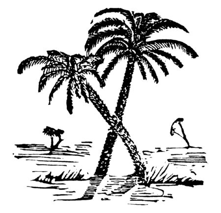 A picture of palm trees crossing each others, vintage line drawing or engraving illustration. Illusztráció
