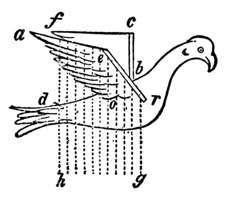 Borelli Bird with Artificial Wings where anterior margin of the right wing, vintage line drawing or engraving illustration.
