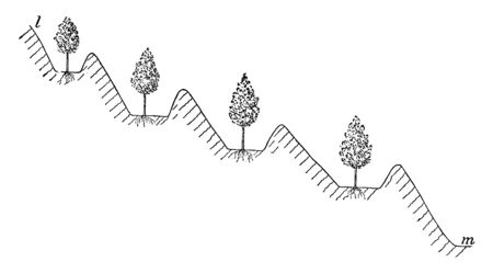 This illustration represents Irrigation with Check Levees, vintage line drawing or engraving illustration.
