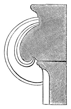 Section of a Volute of an Ionic Capital, spiral, coils, slightly, hollowed, vintage line drawing or engraving illustration. Illustration