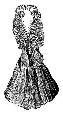 Acorn Barnacle with arms extended, vintage line drawing or engraving illustration. Vektoros illusztráció